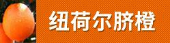 纽霍尔脐橙