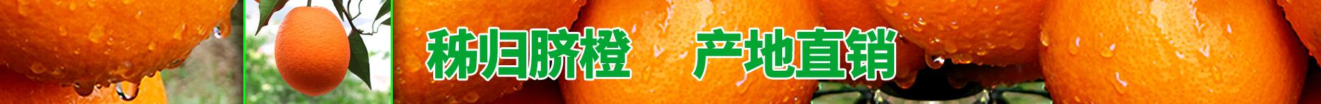 秭归脐橙品牌介绍