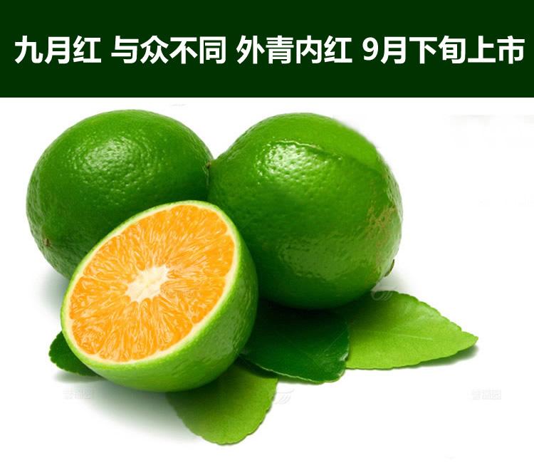 jiuyuehong-1