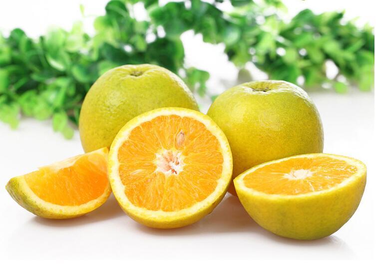 秭归夏橙(夏天的橙子)
