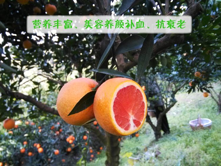 zhonghuahongcheng-4