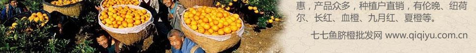 脐橙批发网站